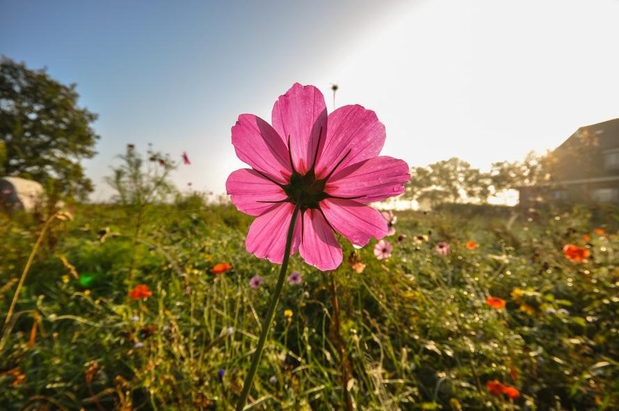 healthy flower reacts to strong sunlight in a garden